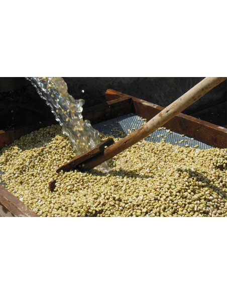 Cafés Di-Costanzo Moka Sidamo grain - Torréfaction classique